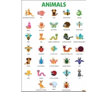 Animals Afişi 2