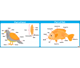 İngilizce Partf Of Bird ve Part Of Fish Afişi